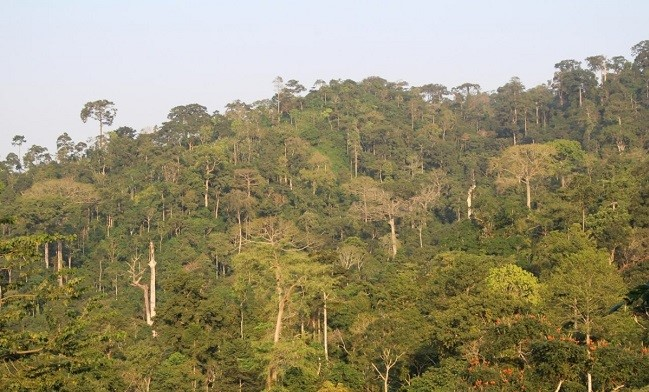 Atewa Range Forest Reserve  Biological Diversity Day: UN report demands urgent action to safeguard forests' biodiversity Atewa Range Forest Reserve
